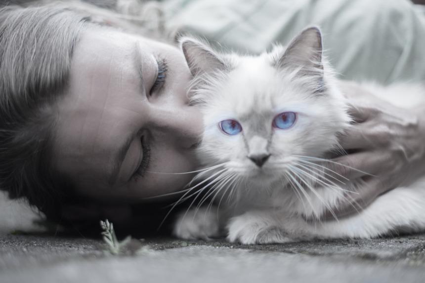 cat-1423844_1280